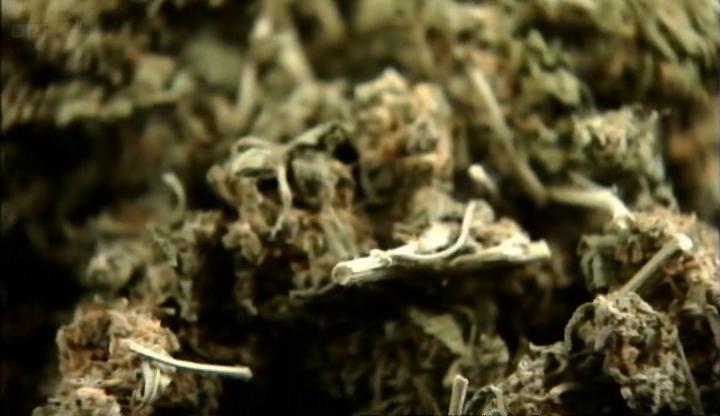 01 Cannabis