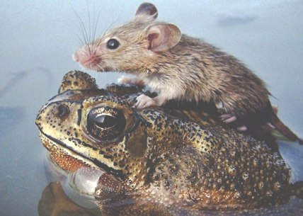 Toad & Mouse